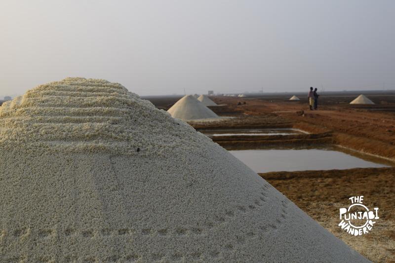 Salt Manufacturing - Turtles in Odisha - The Punjabi Wanderer